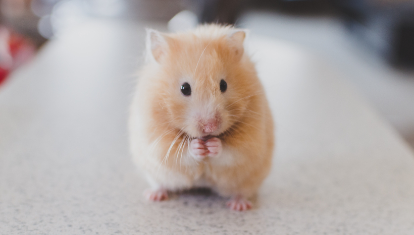 Man Excitedly Celebrates His Hamster's 27th Birthday