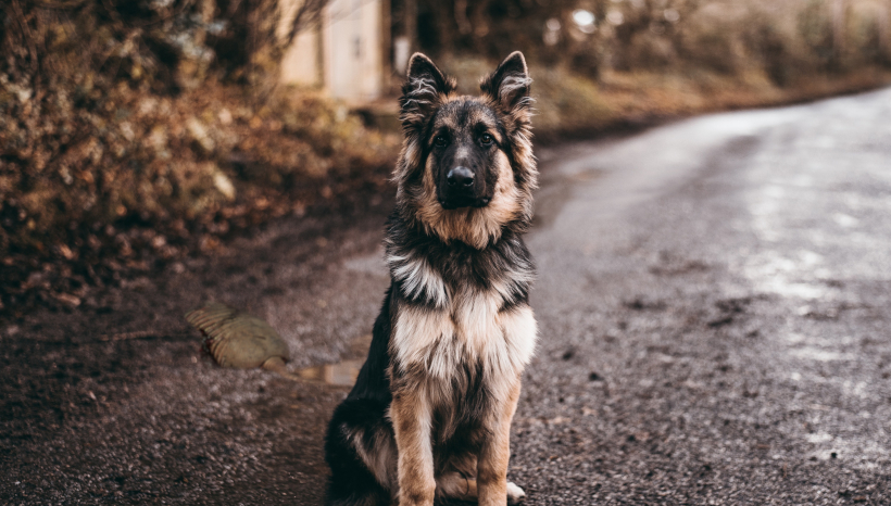 Owner Saved From Roadkill After Faithful Dog Pins it to the Ground