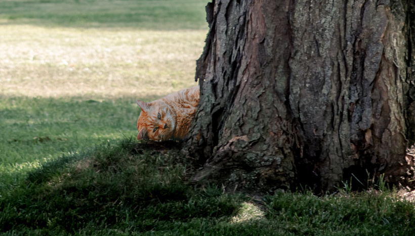 Firefighters Respond to Call of Cat Too Fat to Climb Tree