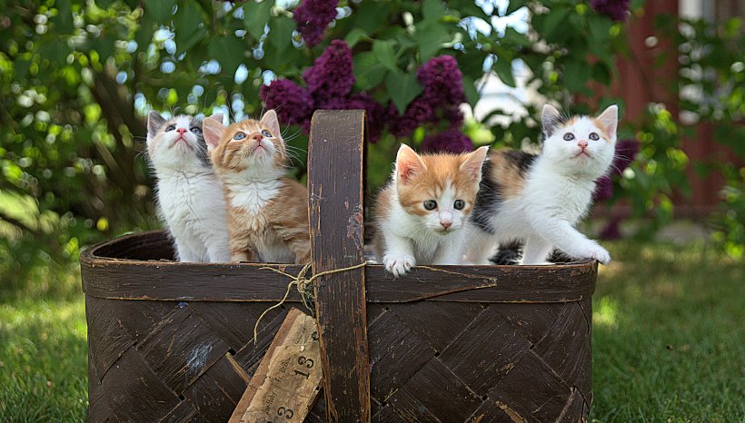 Government Deploys Baskets of Kittens to Solve Nation's Problems