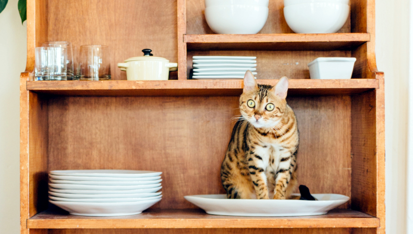 Feline Trump Fan Declares War on Kitchen China