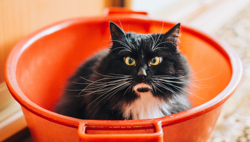 Wait, I Forget, Is This Not the Litter Box?